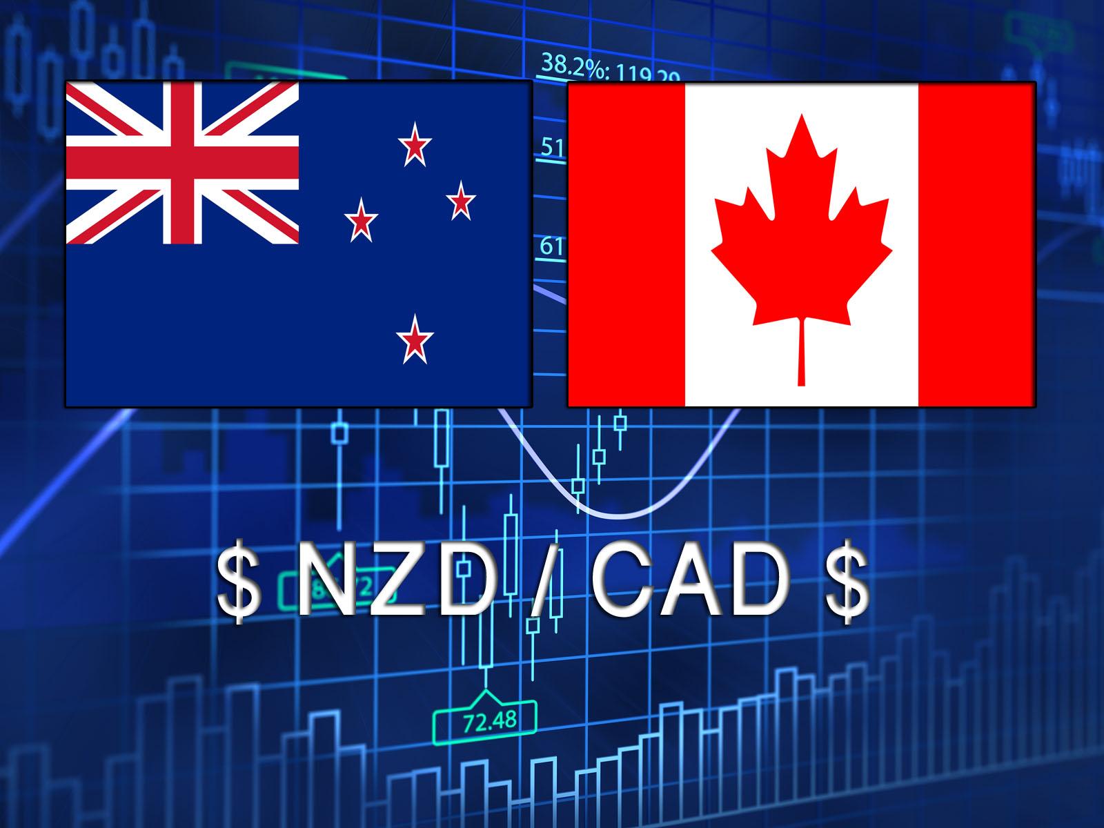 هل يستكمل النيوزلاندى مقابل الكندى صعوده؟!