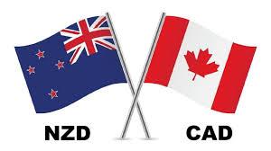 (NZD CAD ) فرصة شراء جيدة وصفقة سوينجية علي الزوج